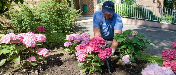 TAA, actu espaces verts, entretien et création massifs fleuris