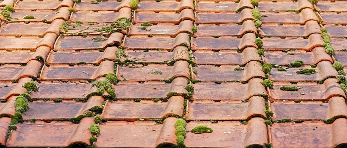 TAA, actu, renovation, mousse toiture