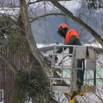 TaaServices_Offrez-à-vos-arbres-une-nouvelle-jeunesse